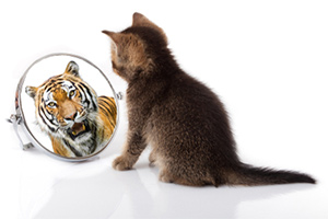 Cat but tiger on the mirror