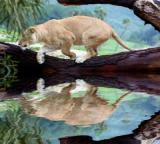 Lion's reflection